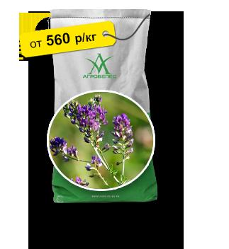 Семена люцерны сорта Верко