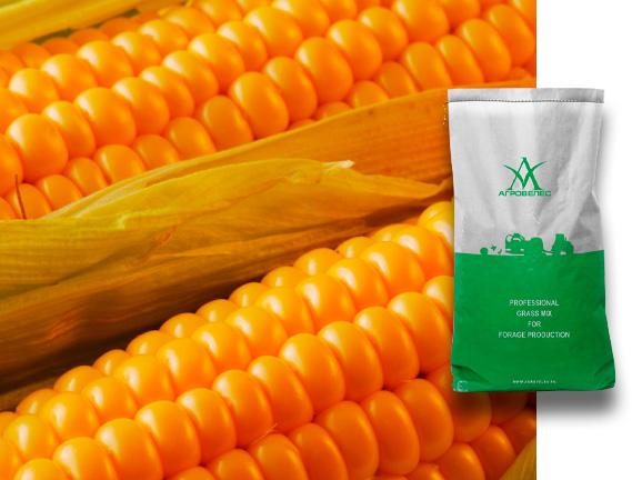Семена кукурузы ЗПСК 341 Maxmim XL