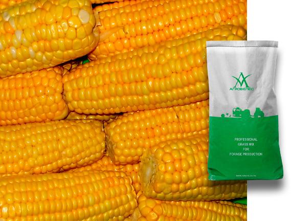 Семена кукурузы ЗПСК 360 Maxmim XL