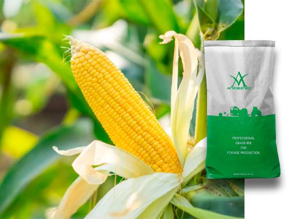 Семена кукурузы ЗПСК 434 Maxmim XL