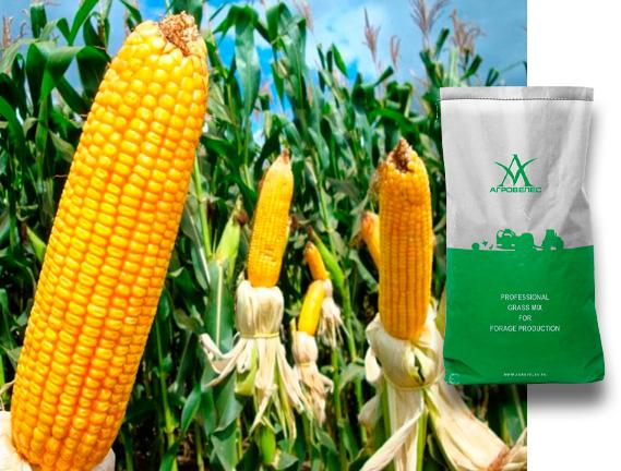 Семена кукурузы ЗПСК 677 Maxmim XL +FORCE ZEA280FS