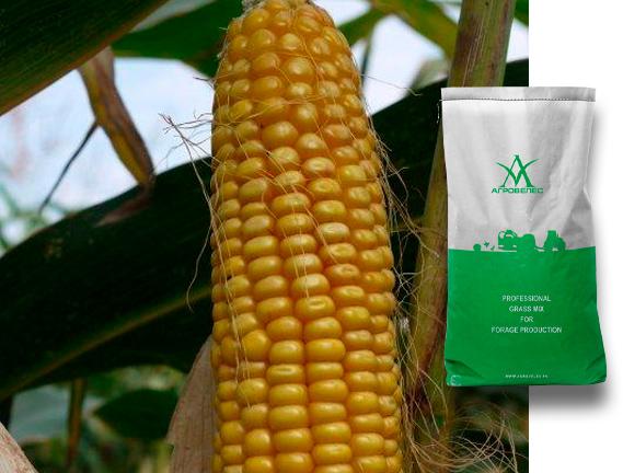 Семена кукурузы Машук 171 МВ