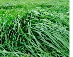 Пастбищные травосмеси