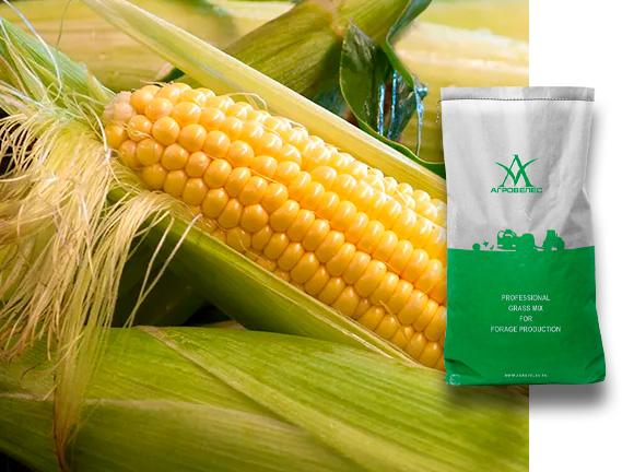 Семена кукурузы ЗП 333 Maxmim XL