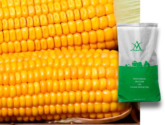 Семена кукурузы ЗПСК 341 Maxmim XL +FORCE ZEA280FS