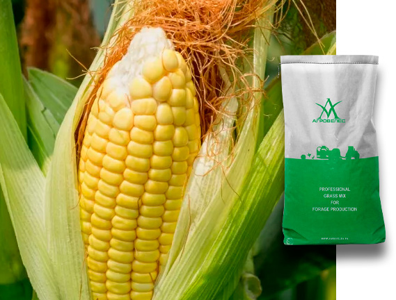Семена кукурузы ЗПСК 677 Maxmim XL
