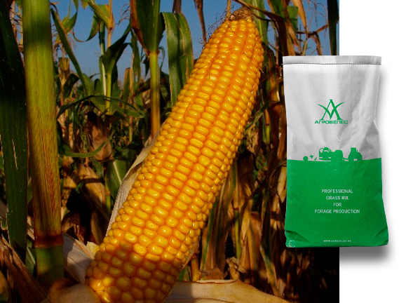 Семена кукурузы Северина