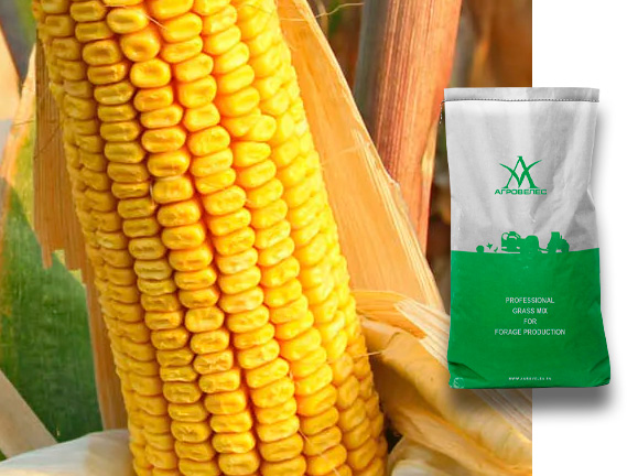 Семена кукурузы Агата СВ