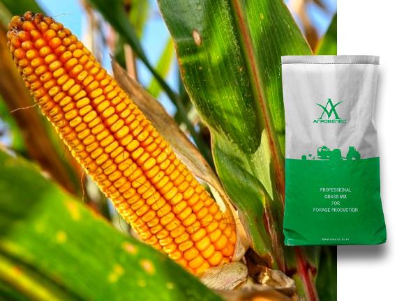 Семена кукурузы Краснодарский 291 МВ