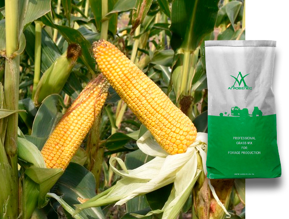 Семена кукурузы Диана МВ