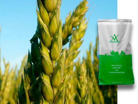 Пшеница озимая  Мера