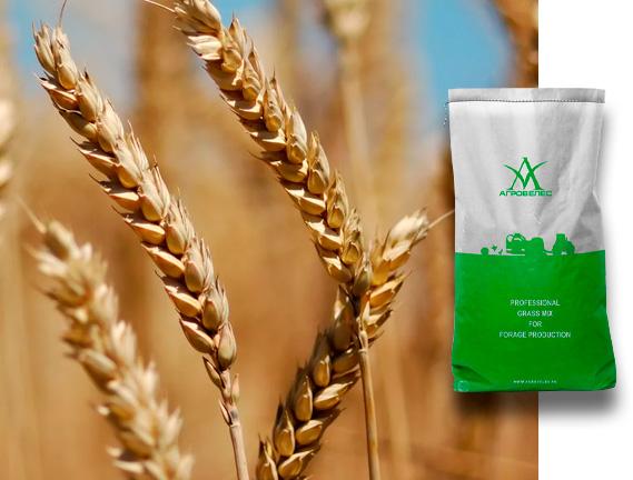 Пшеница озимая  Гром