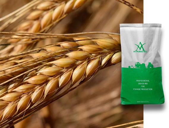 Пшеница озимая Ермак