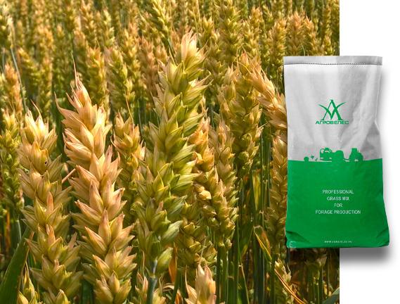 Пшеница озимая Донэко