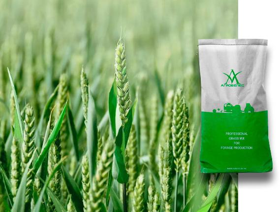 Пшеница озимая Альмера