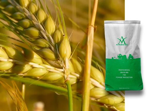 Пшеница озимая Юка